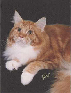 Maine Coon Ancestors An Archive Of Maine Coon Breeding